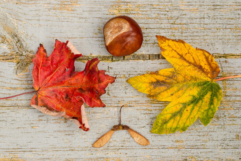 calendario-turismo-eventi-ottobre-sabina-viezzoli-vitaminaG