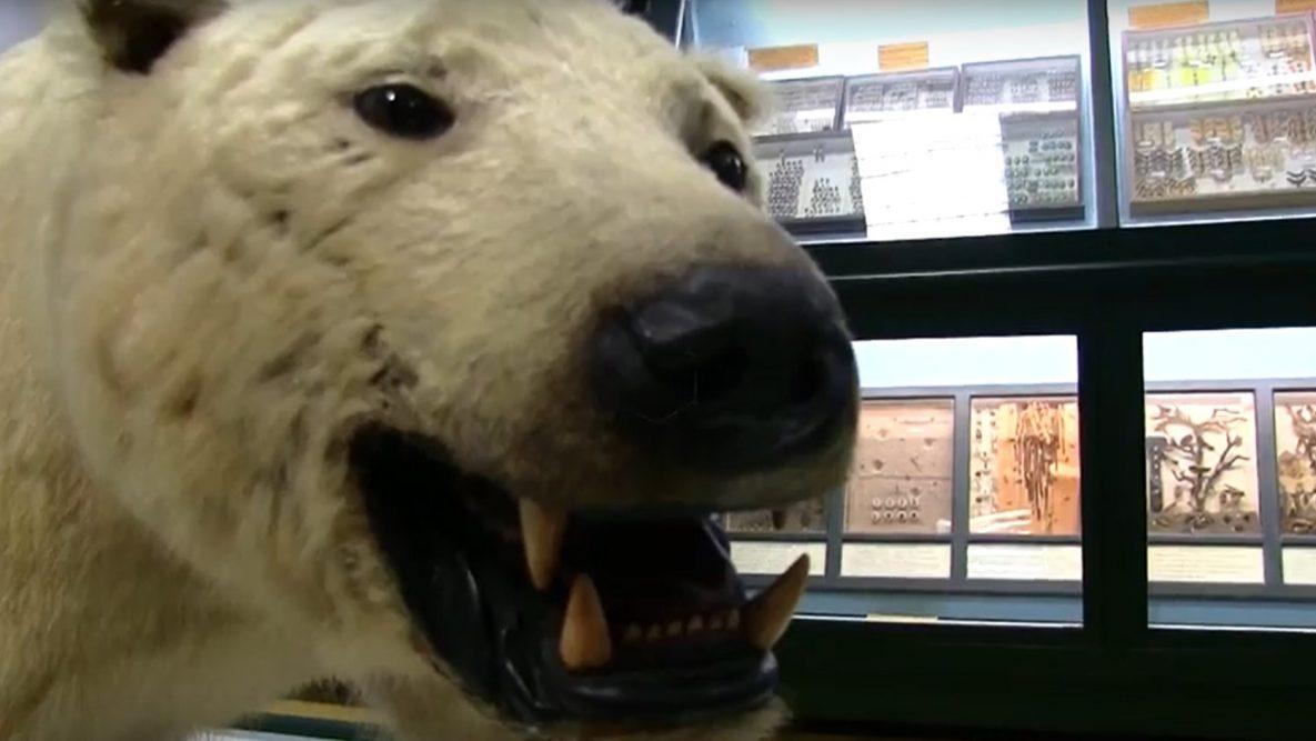 orso museomix ferrara museo storia naturale